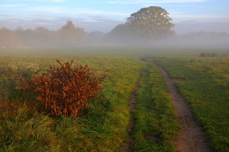 Morning at Epping Forest