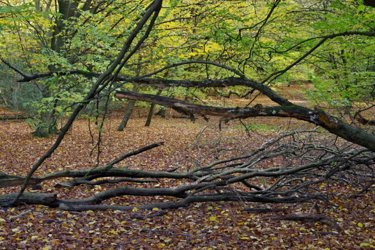 Epping Forest I.